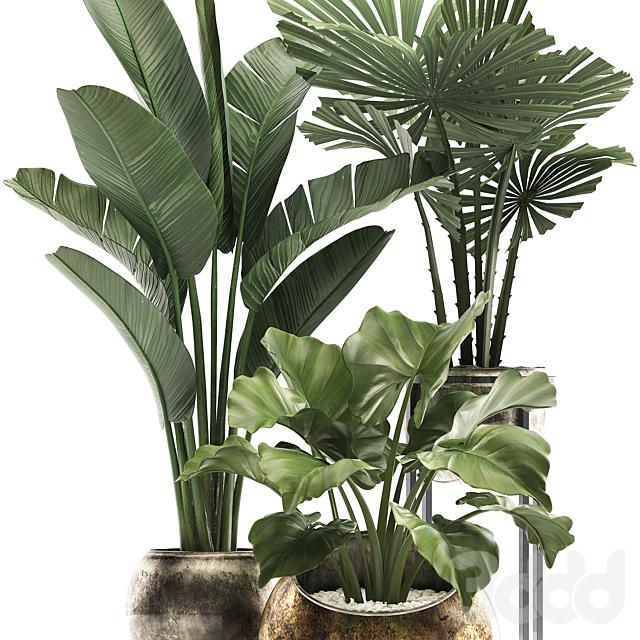 Коллекция растений 467.