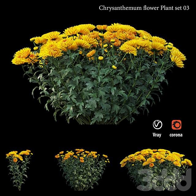 Chrysanthemum flower Plant set 03