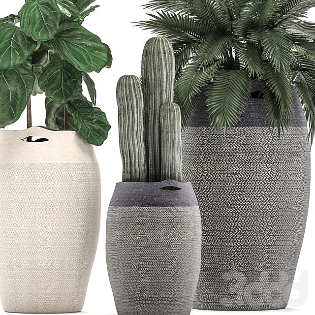 Коллекция растений 478.