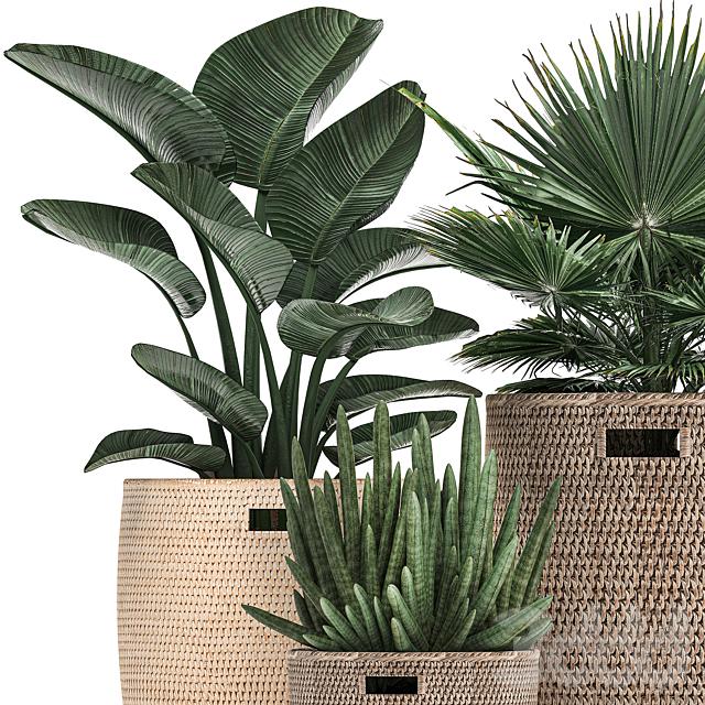 Коллекция растений 480.