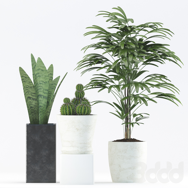 Plants 188