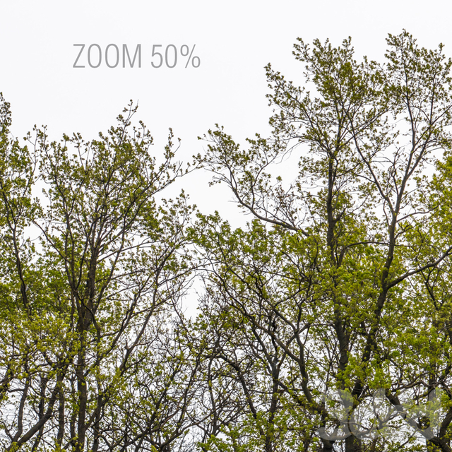 Панорама с деревьями. 3шт. 22k