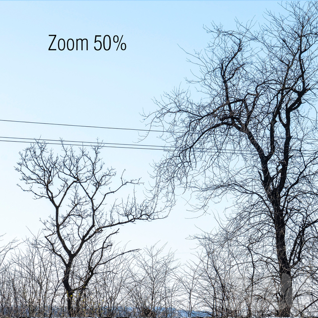 Панорамы с голыми деревьями. 2шт