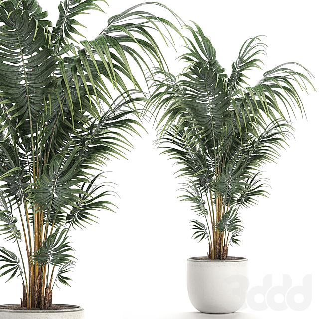 Коллекция растений 518.