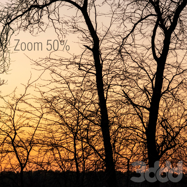 Силуэты деревьев на закате. Панорама