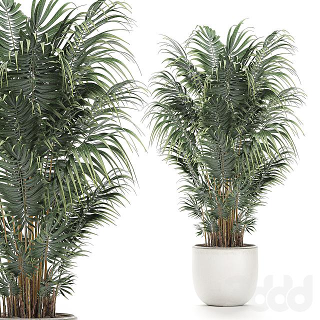 Коллекция растений 520.