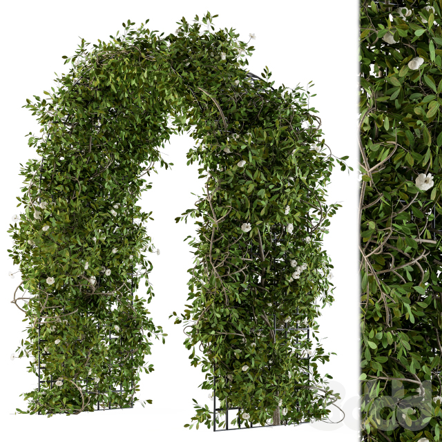 The Plants Pergola