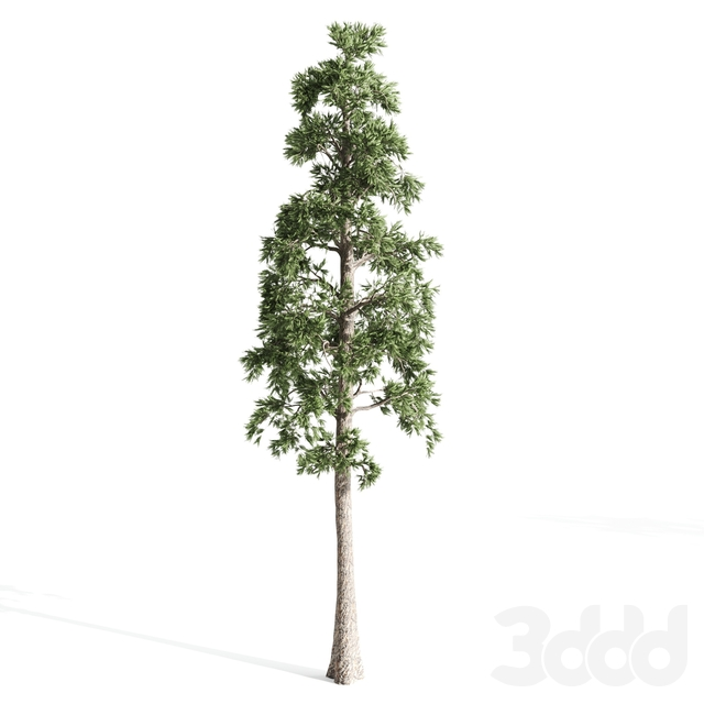 4 pines