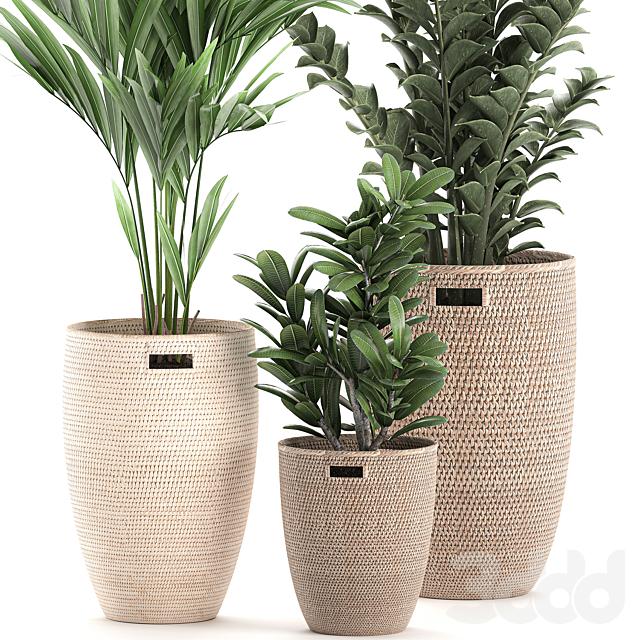 Коллекция растений 568.