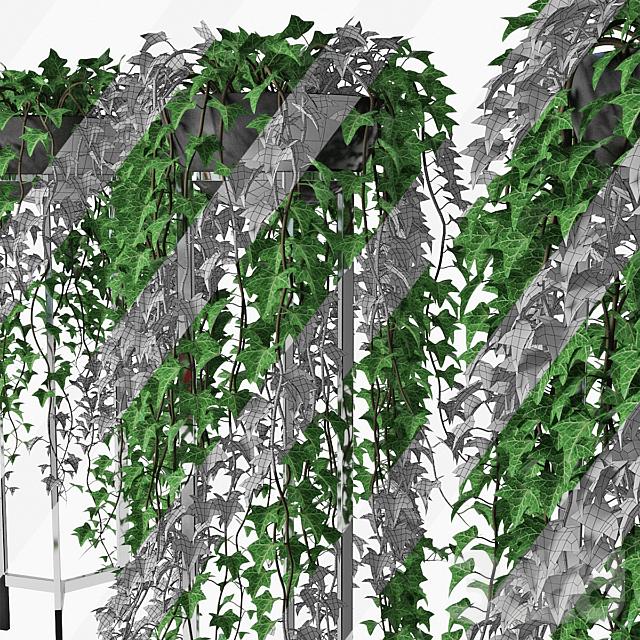 Ivy in pot 15