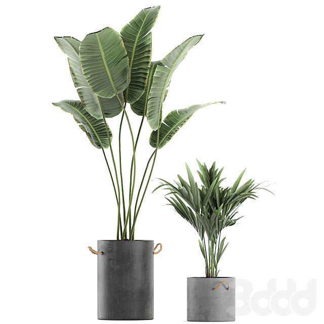 Коллекция растений 595.
