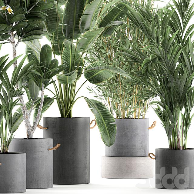 Коллекция растений 597.