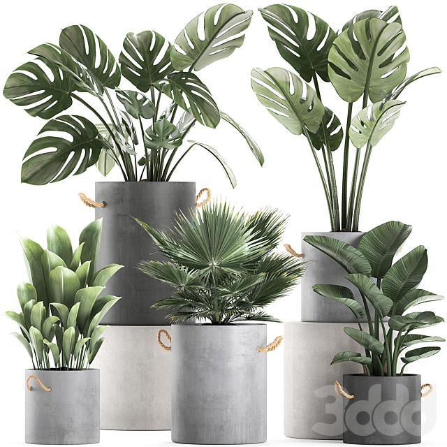 Коллекция растений 603.