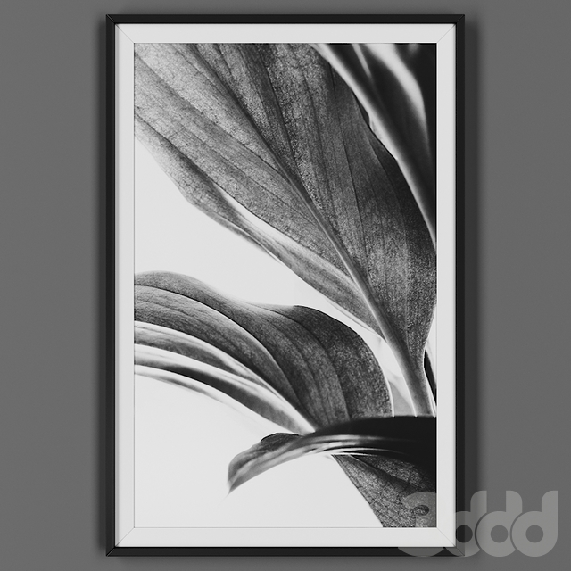 Picture frame 00043-53