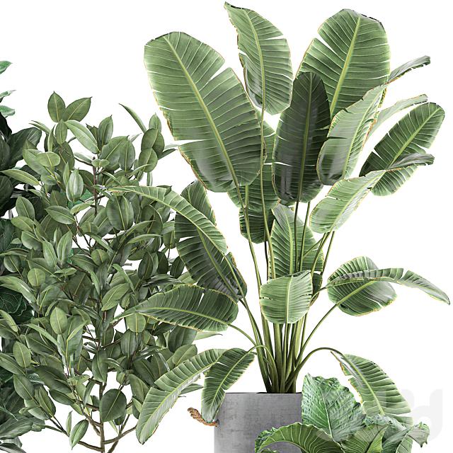 Коллекция растений 613.