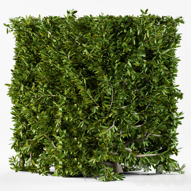 Bush Broadleaf Wall - Cube Form