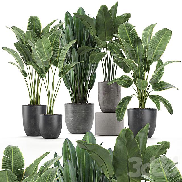 Коллекция растений 614.
