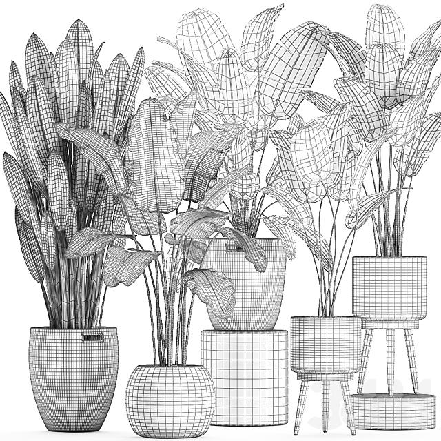 Коллекция растений 615.