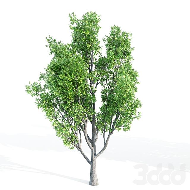 4 tree set09