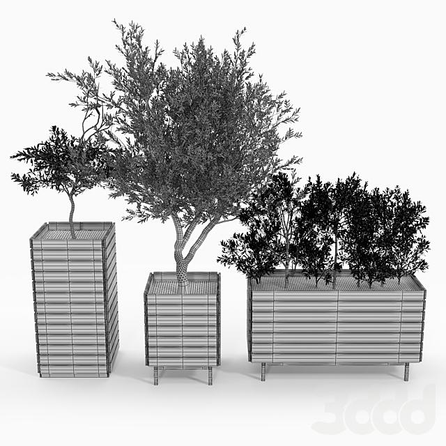 jasper rectangle planter Olea europaea