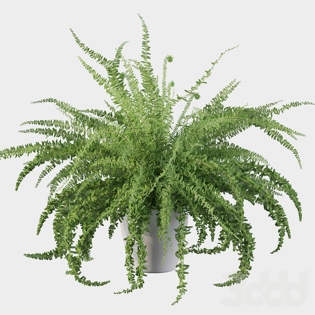 Plants collection 059 - fern