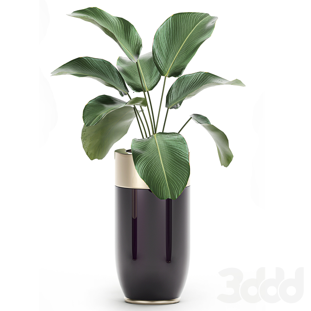 Коллекция растений 704.