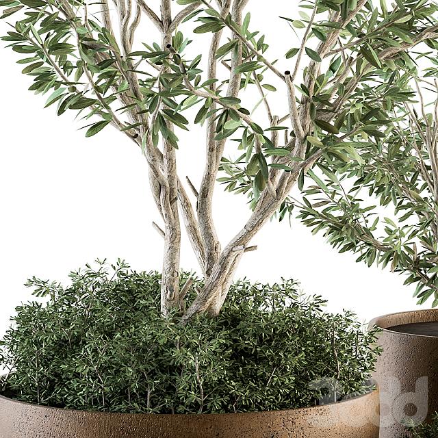 Outdoor Plants Olive  - Set 79