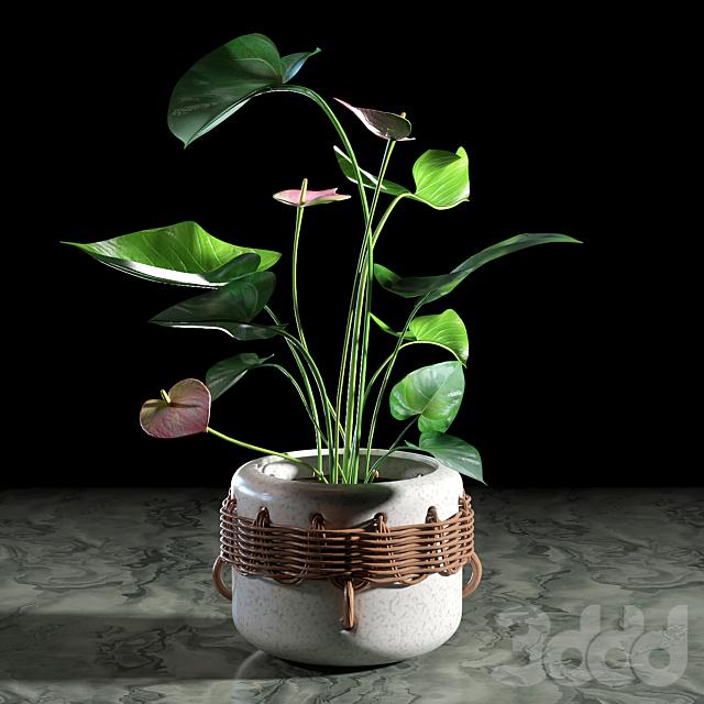 Plant set 08