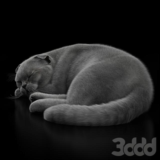 CAT 6_corona