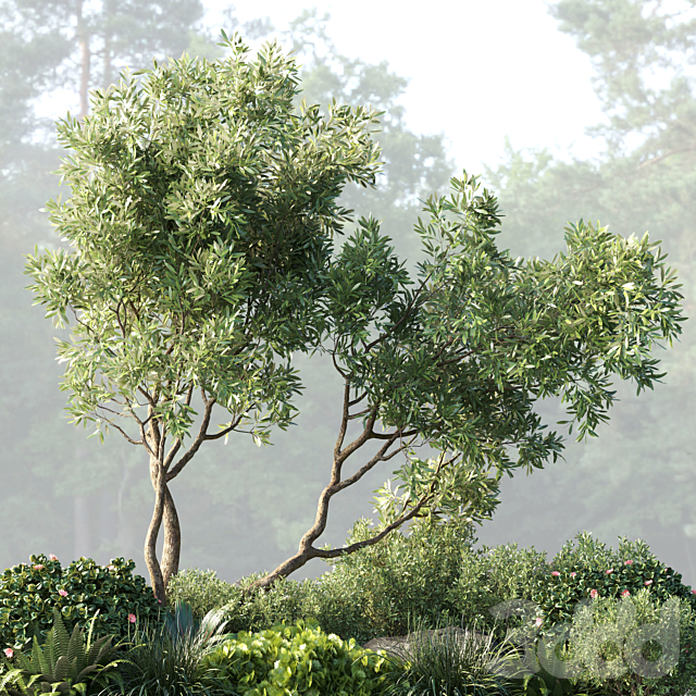 Collection outdoor indoor 62 pot plant & tree & bush & fern the garden pot