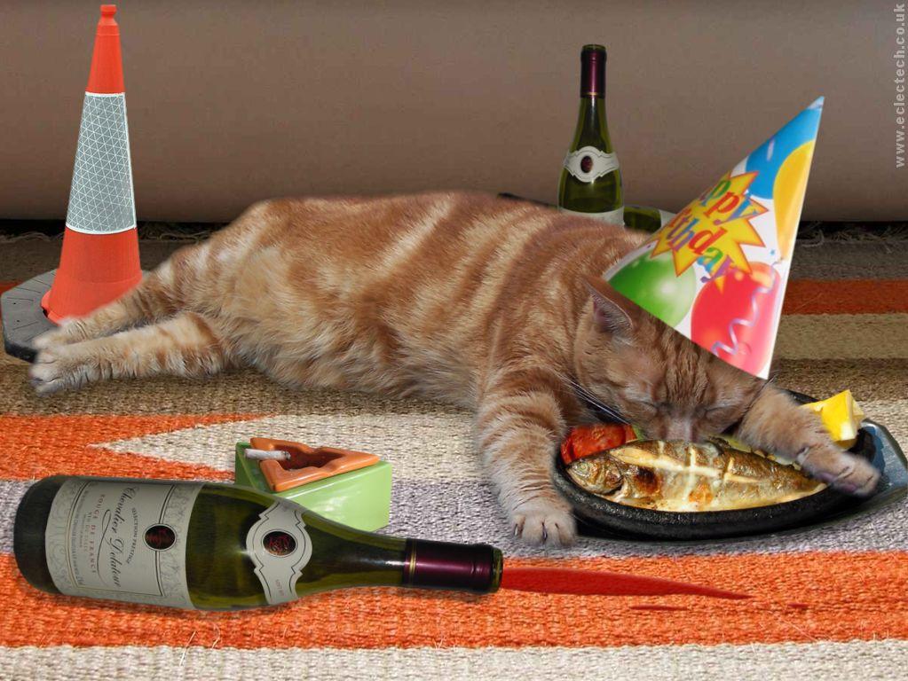 День, прикольная картинки кошек с днем рождения